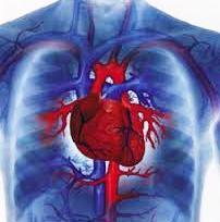Хотите проверить свое сердце?